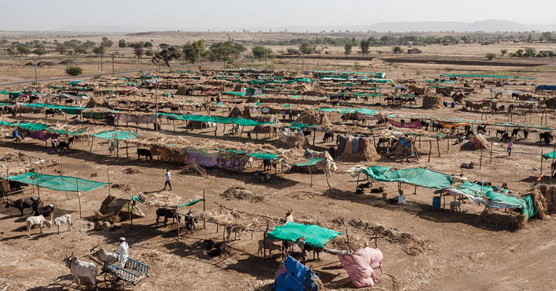 Beed-Cattle-Camp