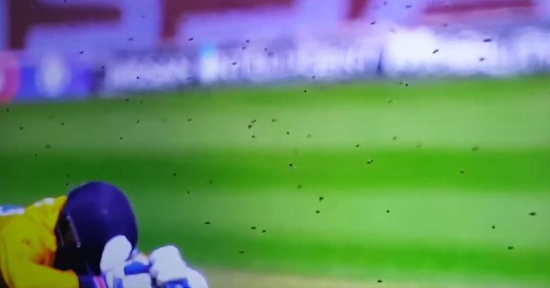 Bees-halt-cricketmatch